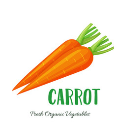 carrot vegetable vector image