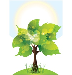 Tree with lush green foliage sunny day vector