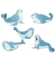 Blue spotted seals vector