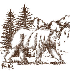 Animal wild bear landscape hand-drawing vector