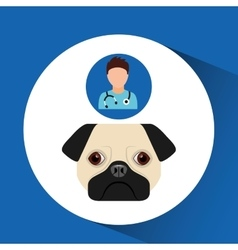 Doctor cartoon veterinarian dog pug vector