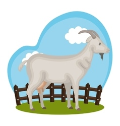 goat animal farm in the field vector image vector image