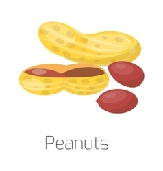 Pile of nuts peanuts vector