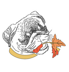 Dog with autumn colorful leaves in the mouth cute vector