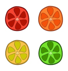 Doodle style citrus slices vector image vector image