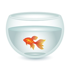 Aquarium with gold fish vector
