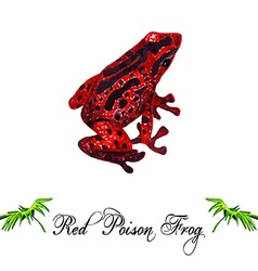 Red frog vector