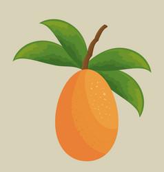 Mango tropical fruit icon vector