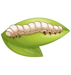 Silkworm vector image vector image