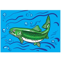 Trout fish in the water vector image vector image
