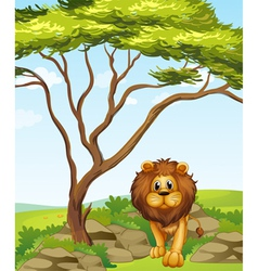 A lion under a tall tree vector