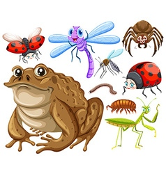 Different kind of insects vector image vector image