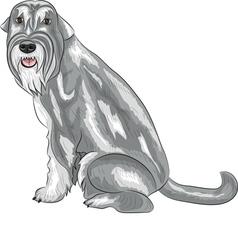 Mittelschnauzer vector image