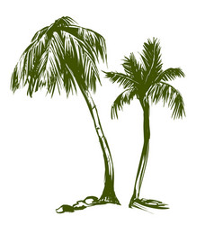 palm collection cartoon hand drawn vector image