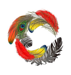 Round frame formed by bird feathers with space for vector