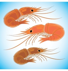 Three prepared shrimps on colorful background vector