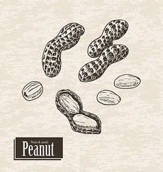 Background with peanut vector