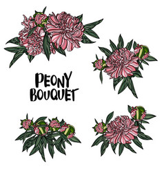 peony bouquet vector image vector image