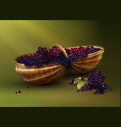 bascket with grapes vector image vector image