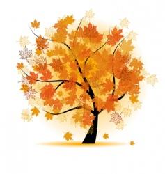 Maple tree autumn leaf fall vector