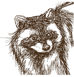 Raccoon sketch hand drawing of wildlife face vector