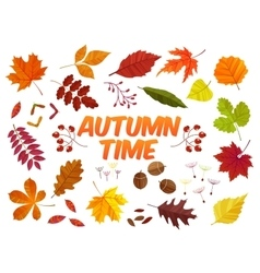 Color autumn leaves on white background Fall leaf vector image