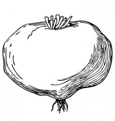 mace lepidium meyenii vector image
