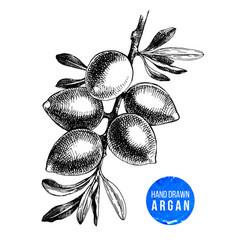 Hand drawn argan nuts branch vector