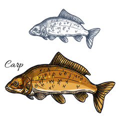 Carp fish isolated sketch icon vector