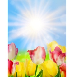 Colorful spring flowers tulips eps 10 vector