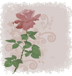 Holiday background with flower rose vector image vector image