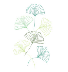 ginkgo biloba leaves vector image