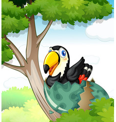 Toucan bird hatching egg on tree vector