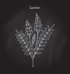 common sainfoin onobrychis viciifolia vector image vector image
