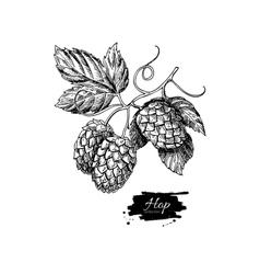 Hop plant drawing Hand drawn vector image vector image