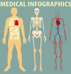 Medical infographic of human body vector