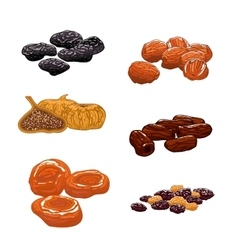 Dried fruits set isolated icons vector