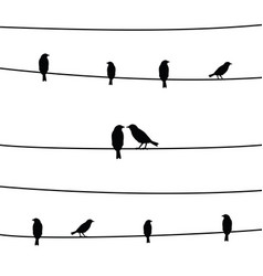 birds on wires4 vector image