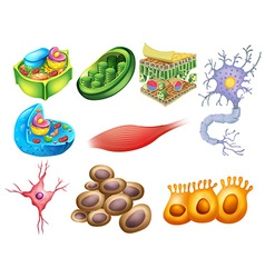 Different biology cells vector