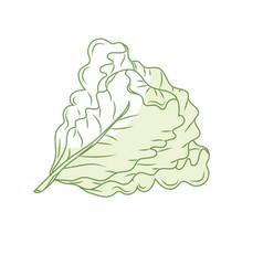 Silhouette fresh lettuce natural vegetable vector