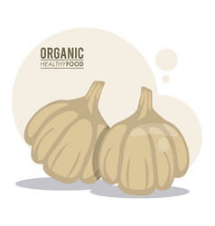 organic healthy food garlic vector image
