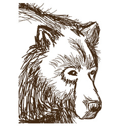animal wild bear face hand-drawing vector image