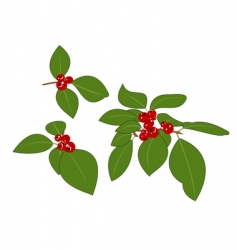 Red berries vector