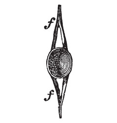 Vertebra of a fish vintage vector