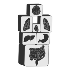 Internal organs cubes set vector