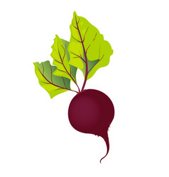 beet with leaf isolated vector image vector image