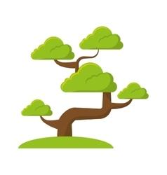 bonsai tree culture japanese vector image