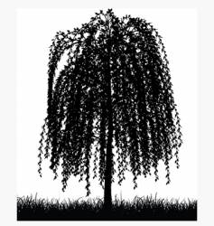 Weeping willow tree vector