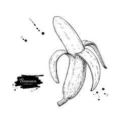 Banana drawing isolated hand drawn peel vector