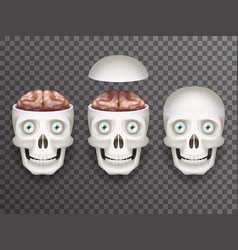 Realistic human skull with eyes and brain isolated vector